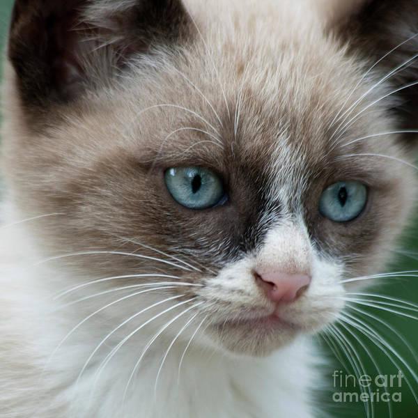 Faunal Photograph - Pauls Little Cat by Heiko Koehrer-Wagner