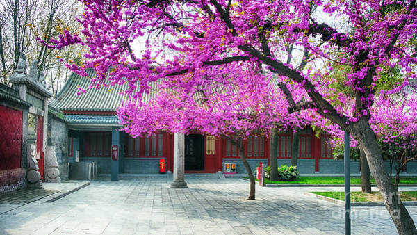 Wall Art - Photograph - Pavilion With Trees Blooming by George Oze