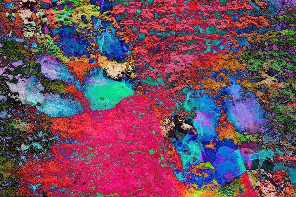 Photograph - Paw Prints Colour Explosion by Dorothy Berry-Lound