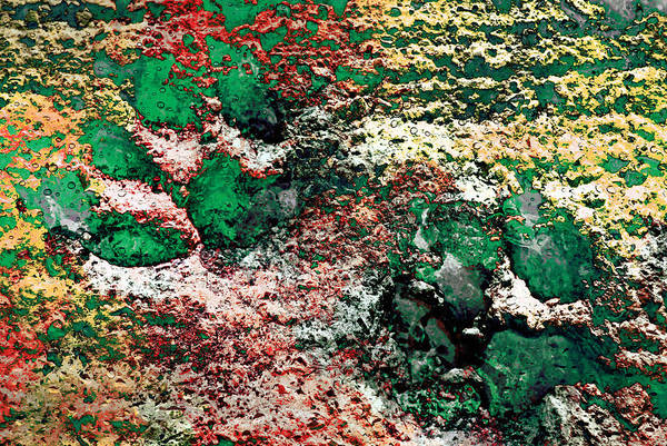 Photograph - Paw Prints In Green And Red And Yellow by Dorothy Berry-Lound