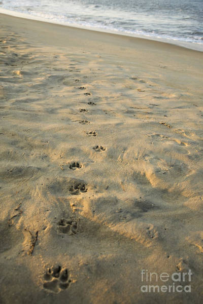 Wall Art - Photograph - Paw Prints In The Sand by Roberto Westbrook