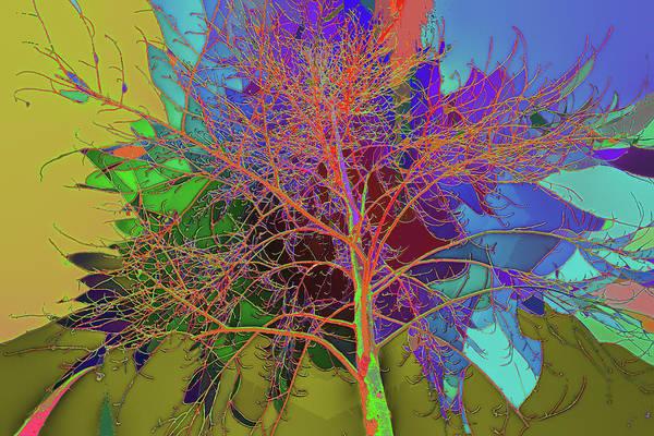 P C C Elm In The Wait Of Bloom Art Print