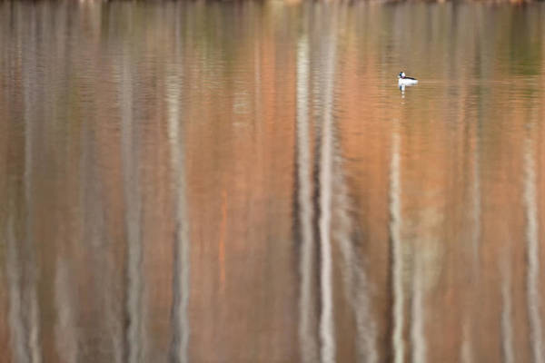 Photograph - Peace And Tranquility by Bill Wakeley