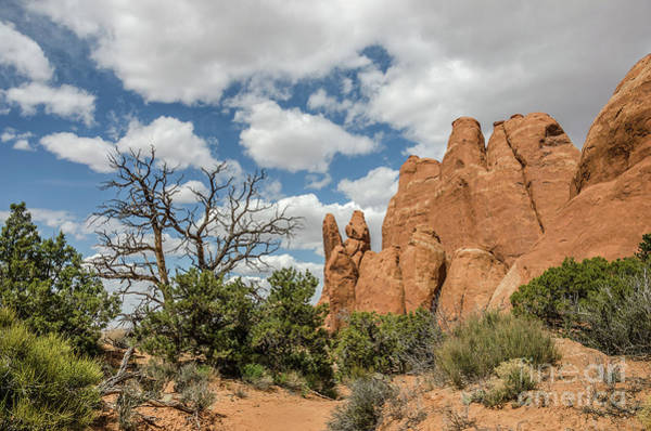 Photograph - Peace In Arches National Park by Sue Smith