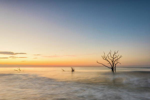 Photograph - Peace In Botany by Jon Glaser