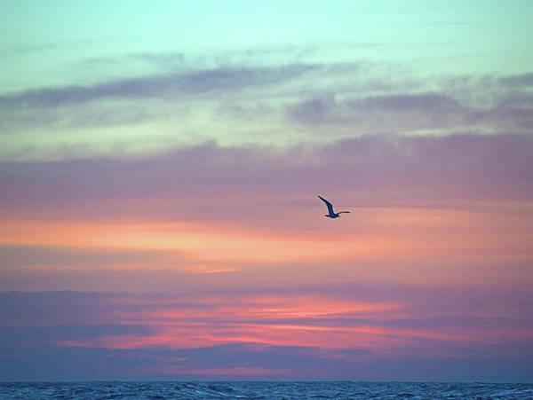 Photograph - Peace by  Newwwman