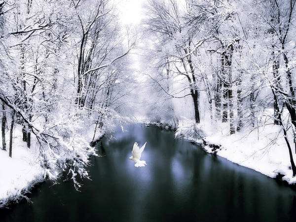 Photograph - Peace On Earth 2 by Jessica Jenney