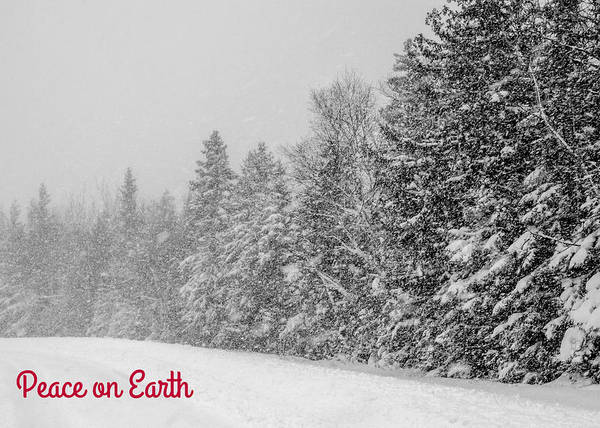 Photograph - Peace On Earth by Stephanie Maatta Smith