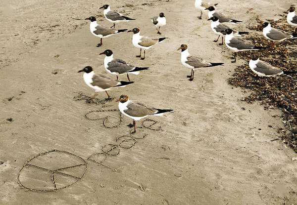 Photograph - Peace On The Beach by Marilyn Hunt