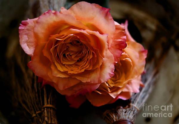 Photograph - Peace Roses by Diana Mary Sharpton