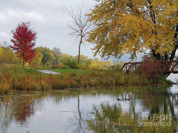 Photograph - Peaceful Autumn Trio With Reflections by Kari Yearous