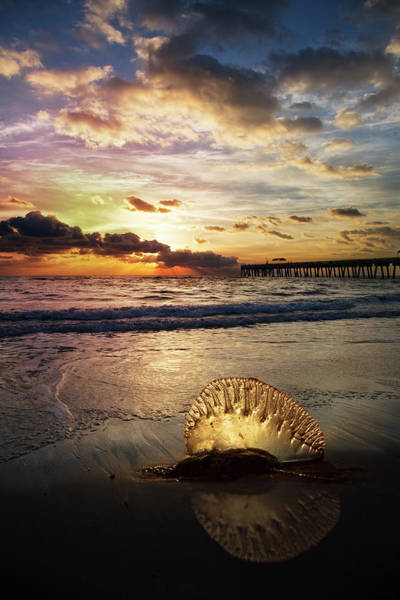 Photograph - Peaceful Beauty by Debra and Dave Vanderlaan