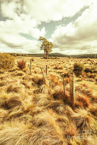 Grassland Photograph - Peaceful Country Plains by Jorgo Photography - Wall Art Gallery