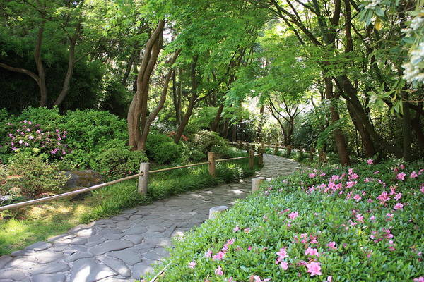 Photograph - Peaceful Garden Path by Carol Groenen