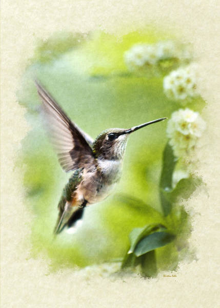 Mixed Media - Peaceful Love Hummingbird Blank Note Card by Christina Rollo
