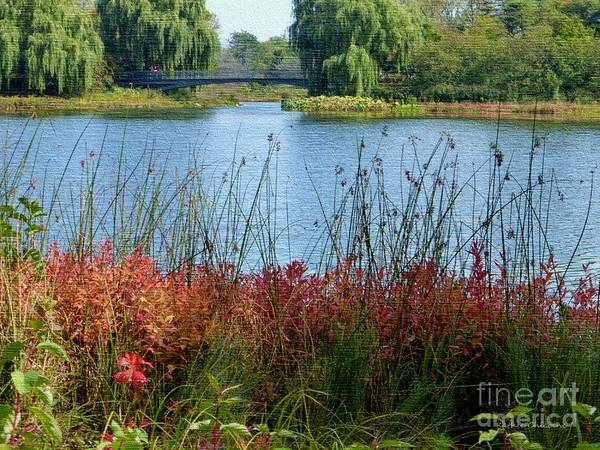 Photograph - Peaceful Moment by Kathie Chicoine