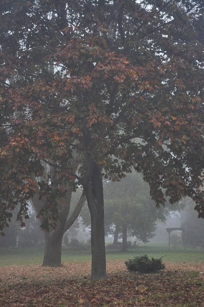 Photograph - Peaceful Morning Mist by Tim Nyberg