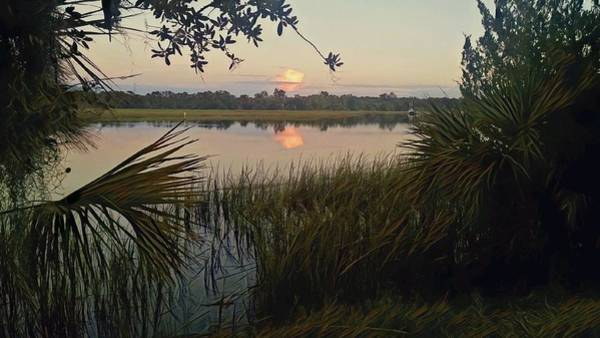 Peaceful Palmettos Art Print