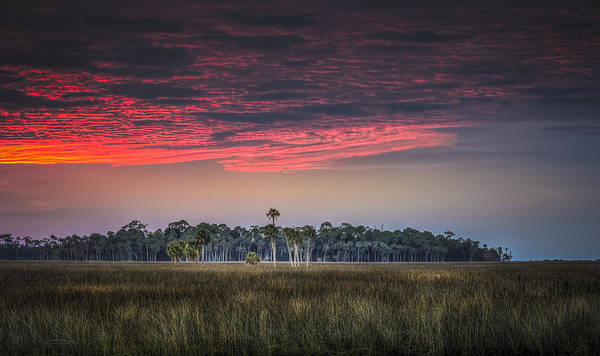 Pine Grove Photograph - Peaceful Palms by Marvin Spates