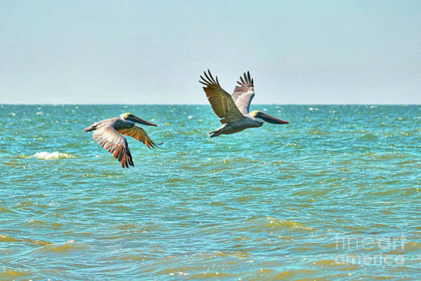 Wall Art - Photograph - Peaceful Pelicans Over Turquoise Water by Carol Groenen