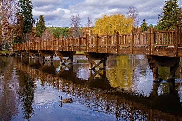 Photograph - Peaceful Reflections At Drake Park by Lynn Bauer