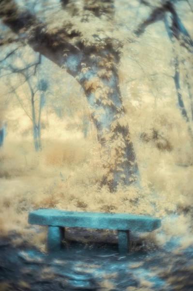 Photograph - Peaceful Rest by Joye Ardyn Durham