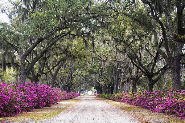 Azaleas Photograph - Peaceful Resting Place by Eggers Photography
