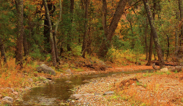 Wall Art - Photograph - Peaceful Stream by Roena King