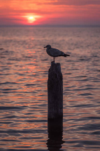 Photograph - Peaceful Sunset Seagull Seaside Park Nj by Terry DeLuco