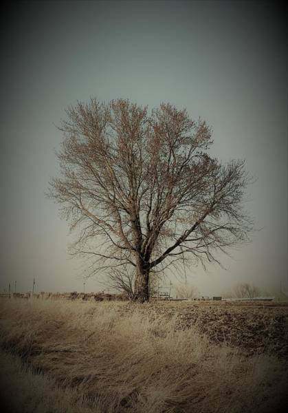 Wall Art - Photograph - Peaceful Tree by Toni Grote