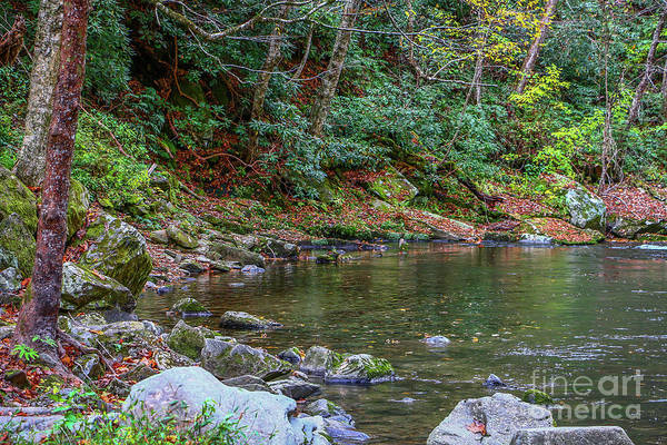 Photograph - Peacefull Mountain Stream by Tom Claud