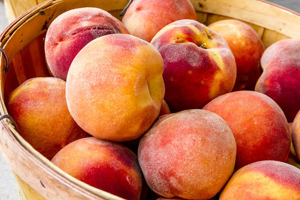 Photograph - Peach Beauties by Teri Virbickis
