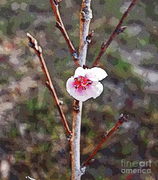 Photograph - Peach Blossom by George D Gordon III