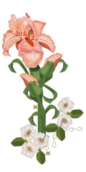Wall Art - Painting - Peach Colored Iris Botanical by Anne Norskog