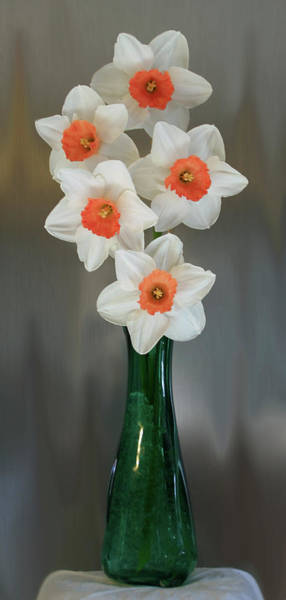 Photograph - Peach Daffodil Vase  by Patti Deters
