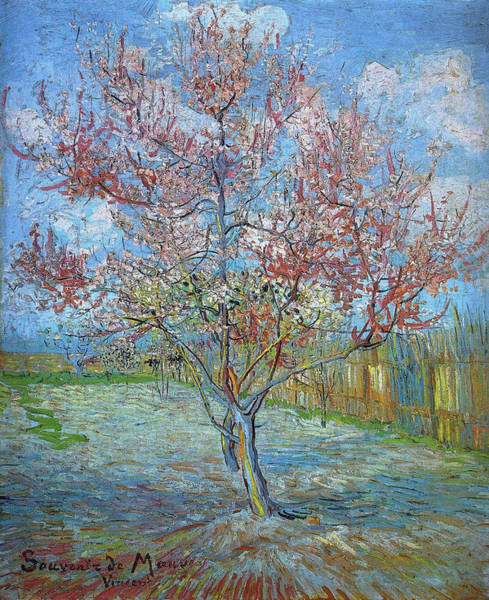 Wall Art - Painting - Peach Tree In Bloom In Memory Of Mauve, 1888 by Vincent Van Gogh