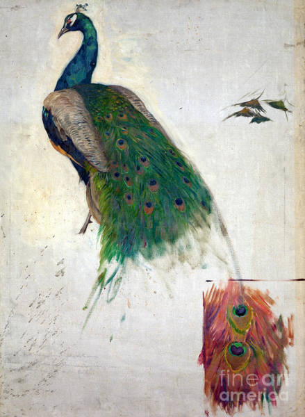 Painting - Peacock 1896 by Granger