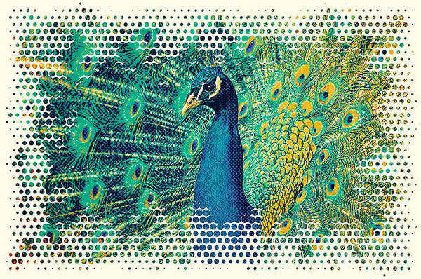 Digital Art - Peacock Art by Angela Doelling AD DESIGN Photo and PhotoArt