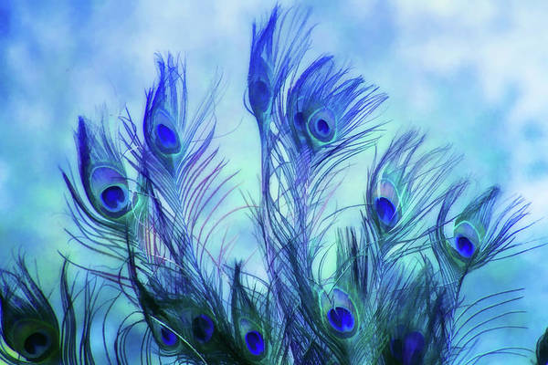 Wall Art - Digital Art - Peacock Beauty by Terry Davis