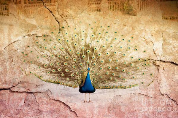 Wall Art - Photograph - Peacock Bird Textured Background by Arletta Cwalina