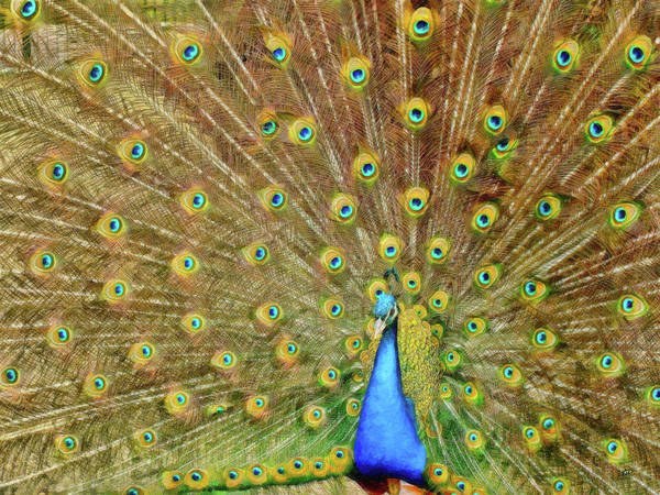 Painting - Peacock - Brd536478 by Dean Wittle