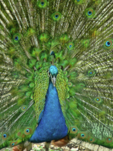 Painting - Peacock - Brd668377 by Dean Wittle