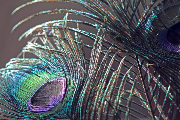 Photograph - Peacock Designs by Angela Murdock