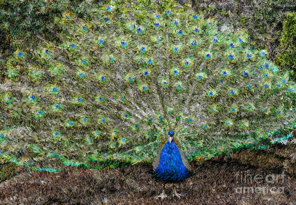 Photograph - Peacock  by Jeff Breiman