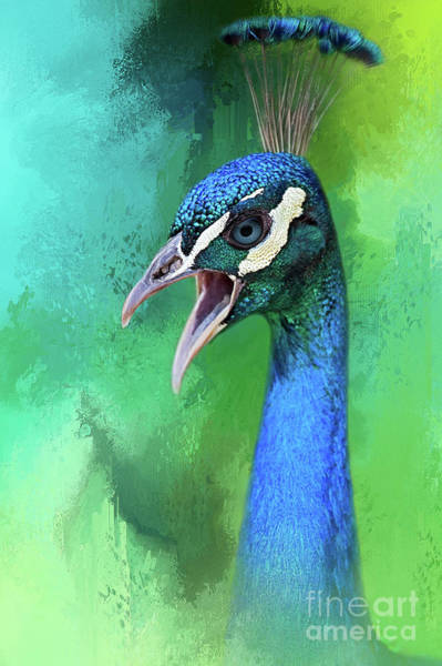 Pheasant Digital Art - Peacock by Marco Fischer