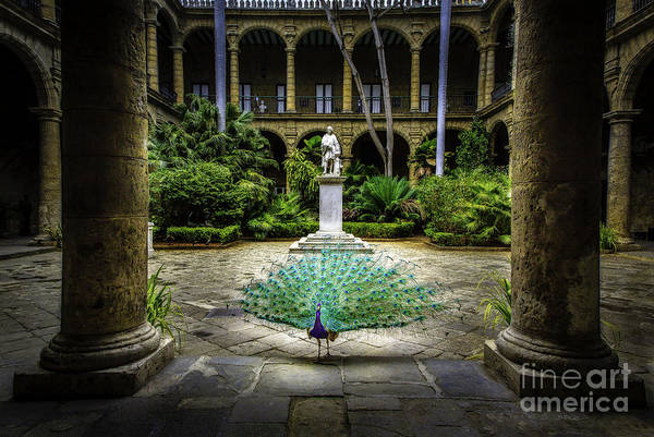Photograph - Peacock Of Old Cuba by Craig J Satterlee
