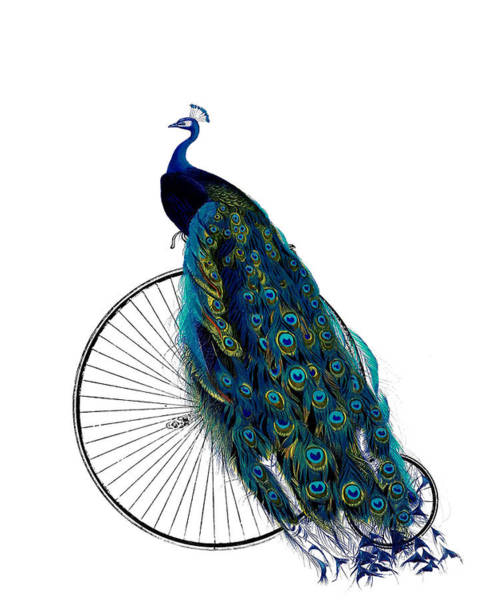 Blue Feather Wall Art - Digital Art - Peacock On A Bicycle, Home Decor by Madame Memento