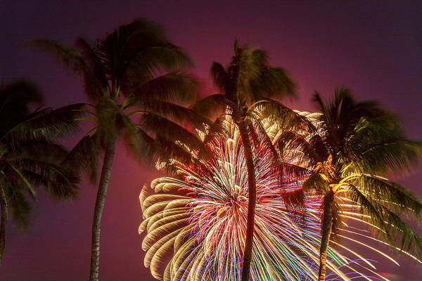 Coconut Trees Photograph - Peacock Palms by Sean Davey