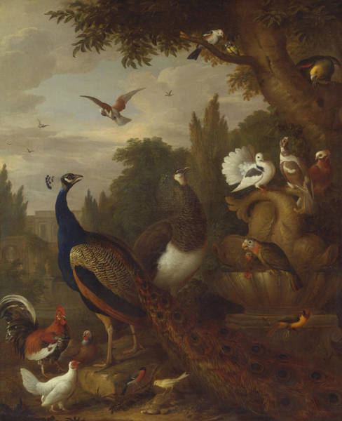 Canaries Painting - Peacock, Peahen, Parrots, Canary, And Other Birds In A Park by Jacob Bogdani