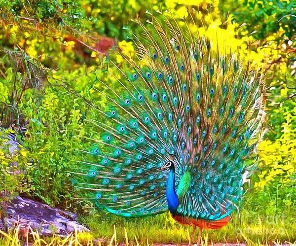 Painting - Peacock Posing by Catherine Lott